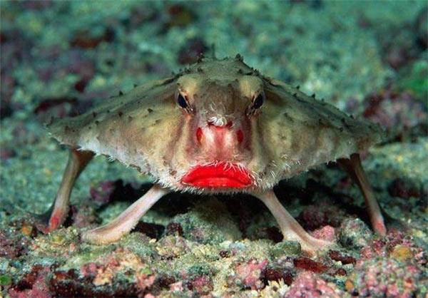 جانورانی که تا کنون ندیده اید را می توانید در این عکس ها ببینید. حیواناتی عجیب و بعضا خنده دار که به ندرت کسی آن ها را دیده باشد.