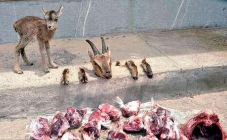 اوج قساوت قلب یک شکارچی