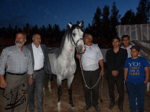 مسابقات زیبایی اسبهای اصیل در رفسنجان به روایت تصویر
