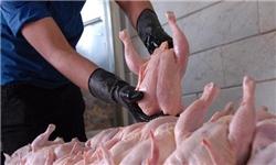 معدومسازی ۱۱ هزار کیلوگرم مرغ غیربهداشتی در رفسنجان