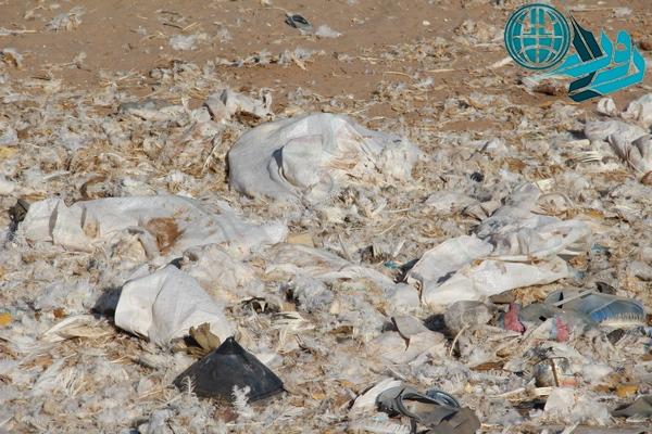 مرغ های معدوم شده و آلودگی محیط زیست در رفسنجان/ وقت بیداری مسؤولان امر فرارسیده