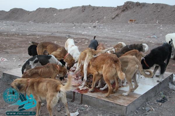از وجود ۱۰ هزار سگ ولگرد تا هزینه ۴۰ میلیارد تومانی برای خرید واکسن هاری