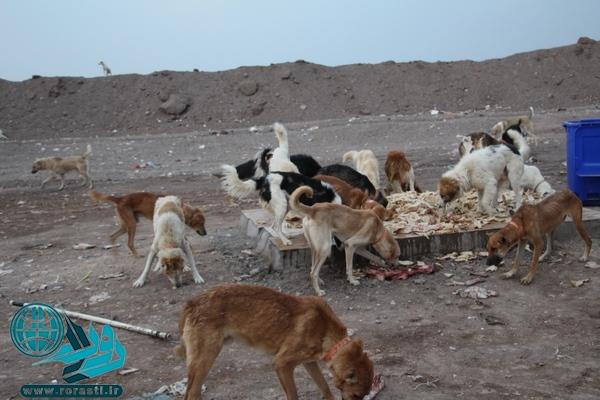 تولید بالای زباله عامل افزایش حضور سگهای ولگرد است+عکس