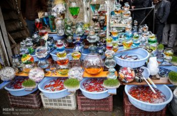 جولان ماهی های قرمز در آکواریوم «غفلت» مسئولان