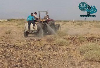 مبارزه با ملخ در ۶۰۰۰ هکتار باغات رفسنجان انجام شد