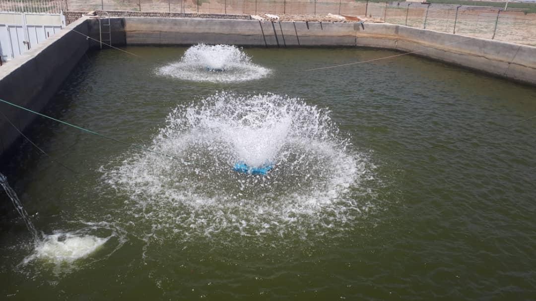 قابلیت پرورش ماهی در ۴۰۰ استخر در رفسنجان/احداث دو مزرعه پرورش ماهی خاویاری در رفسنجان