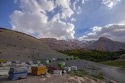 نیمی از عسل شهرستان رفسنجان در منازل تولید میشود