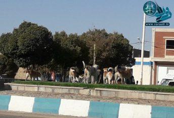 قصه ناتمام سگهای ولگرد در رفسنجان/آمار حیوان گزیدگی در رفسنجان ۲،۳ برابر میانگین کشور