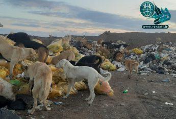 خطر زبالههای عفونی بیخ گوش رفسنجانیها+تصاویر