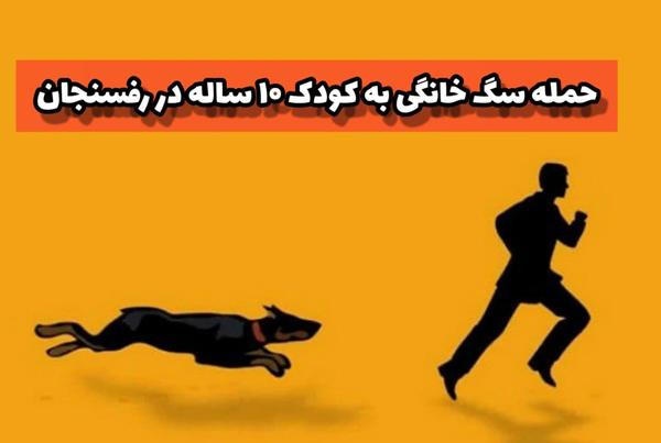 حمله «سگ های خانگی» به کودک ۱۰ ساله در رفسنجان/دکتر نژادقادری: سگ های خانگی باید قلاده دار شوند