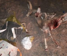 دستگیری شکارچی ۳ راس قوچ در حفاظت گاه منصورآباد رفسنجان