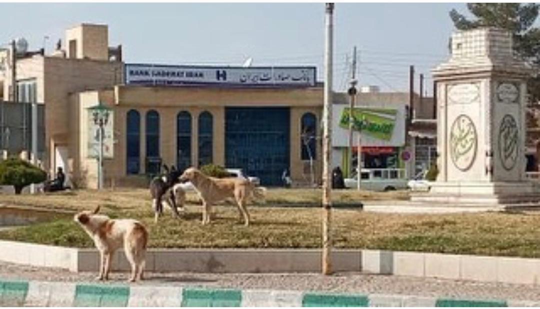 قصه ناتمام حمله سگ های ولگرد به مردم رفسنجان
